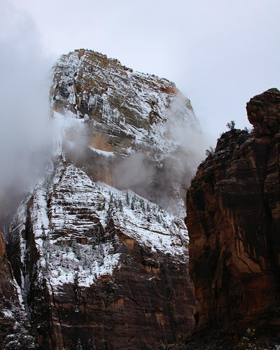 8x10 Zion NP IMG_0612