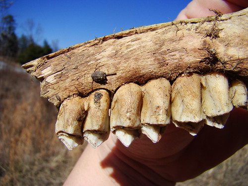 back of teeth
