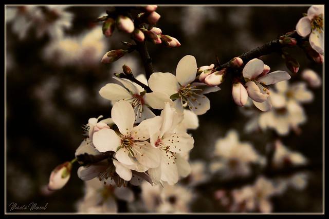 ...en flor.