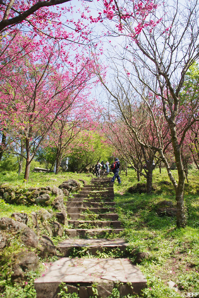 2011-02-26 陽明山花季半日遊