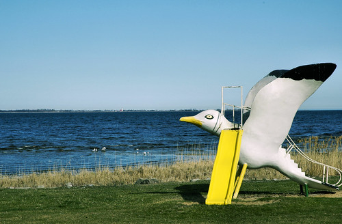 Tawas Gull