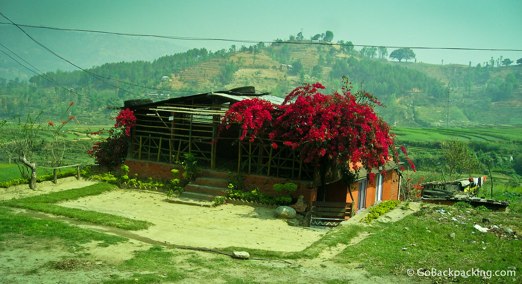 Flowers brighten up the Nepali landscape
