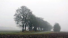 Road through the fog (Machiel Taal) Tags: trees landscape nederland drenthe thegalaxy flickraward mygearandme mygearandmepremium mygearandmebronze mygearandmesilver mygearandmegold mygearandmeplatinum mygearandmediamond