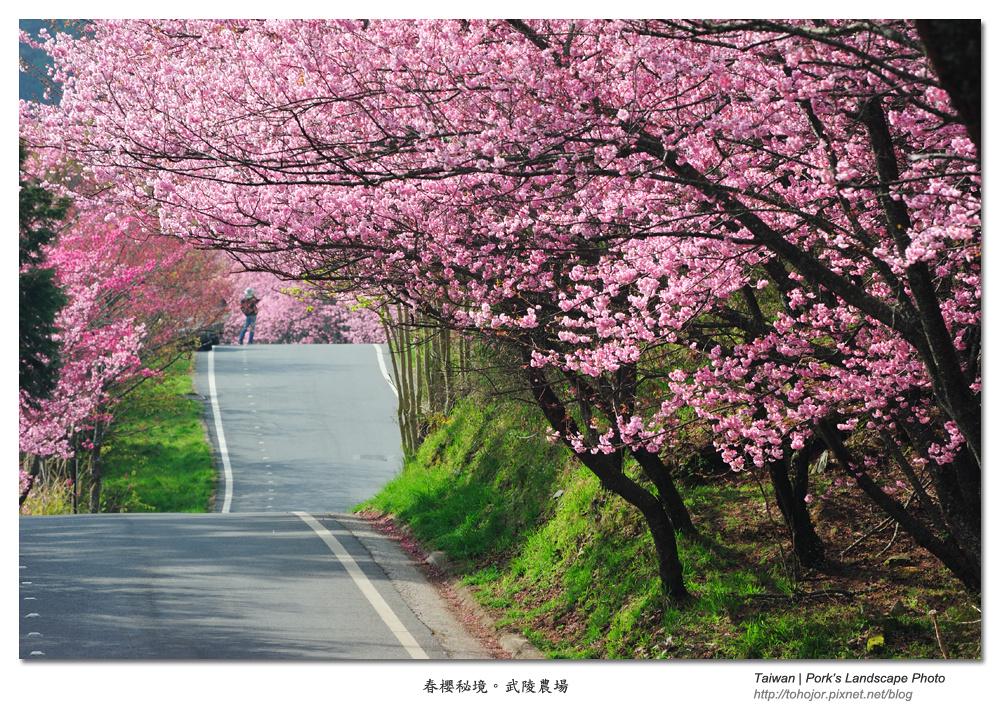 2011 春櫻秘境 。武陵農場