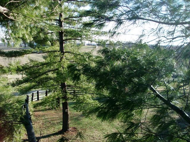 tree climbing 027