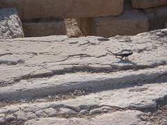 Small Lizard on Ruins at Palmyra, Syria.
