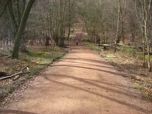Steep hill near High Beech, Epping Forest