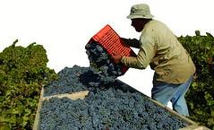 Sólo los vinos varietales traccionan las ventas