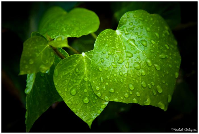 Gentle Drops