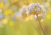 تأمل بالحياة وتفاءَل (mzna al.khaled) Tags: flowers red flower macro green colors beautiful yellow canon focus arabia natrue 105mm الوان طبيعة 50d جميلة اخضر ماكرو ملون macrolife كلوزاب