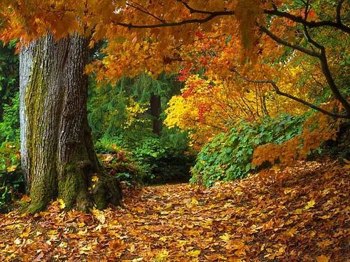 El bosque templado deciduo o caducifolio
