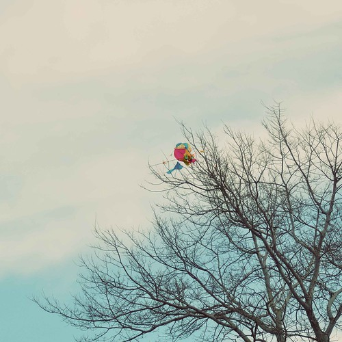 Kite stuck on Tree