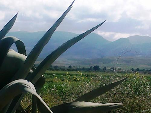 Triffa Beni Znassen تريفة جبال بني يزناسن