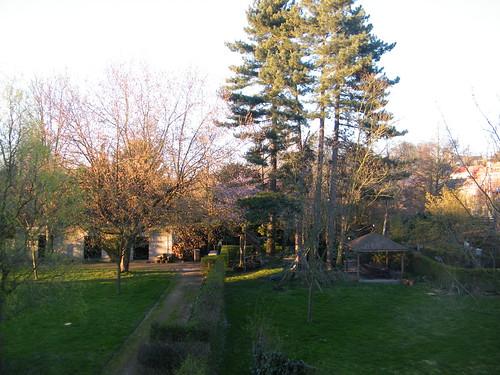 Backyard on a sunny day