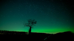 The night... (Chee Seong) Tags: berwick east lothian scotland uk aurora northern light green polar tree road night sky star dark silhouette canon 5dm2 canon24mmf14