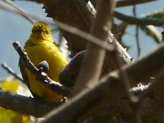 P1150361 (babsybou) Tags: travel india birds silent watching kerala du valley yatra sud inde attapadi birdswatching babsybou malleeshwaramjunglelodge pettickal