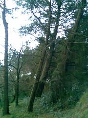 20090205(006) (naialaka) Tags: natura basoa belarra baserria berdea paisajea