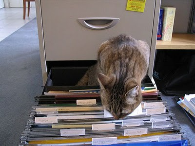 organize_your_cats_04