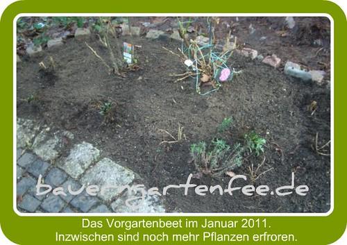 Vorgartenbeet, 17.1.2011 (Rahmen)