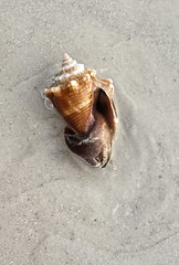 Live Shell