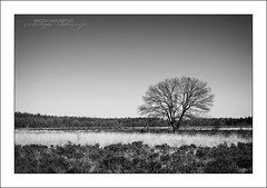 B&W Tree (Vincent_AF) Tags: winter blackandwhite bw holland tree nature netherlands season photography photo alone foto fotografie cc photograph creativecommons lonely af flickrphoto flickrimage flickrphotography afphotography vincentvanderpas archetypefotografie