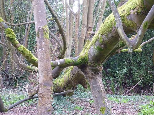 Spooky tree 2