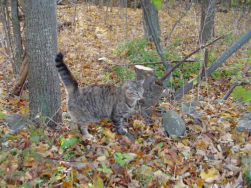 in her woods
