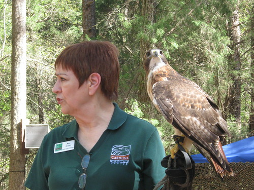 A Volunteer Holding a Cooper's Hawk
