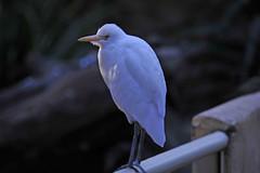 featherdale16.jpg (picsie14) Tags: animals interestingness interesting wildlife sydney australia nsw featherdale 80400mm australiananimals interestingness2 longlens d700 nikond700