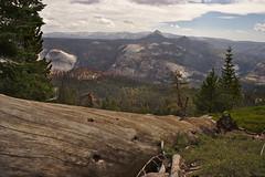 Spiral Tree over Yosemite (john_sprocket) Tags: yosemite yosemitenationalpark yosemitevalley nationalparks nationalpark california mountains nature elevation clouds sky cloudsrest tree trees forest log
