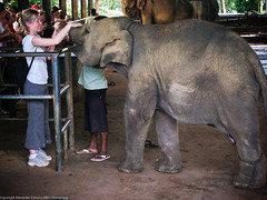 Девушка поит молоком слоненка