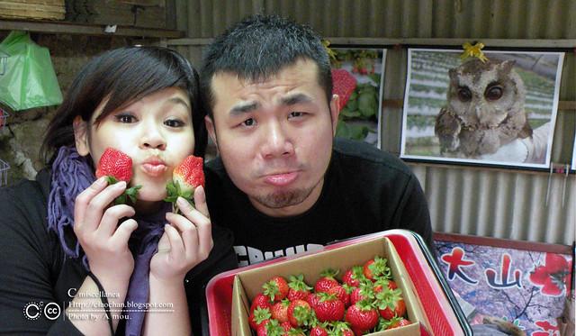 大湖草莓之旅 - 大力推薦 大山農園 DSCN8857