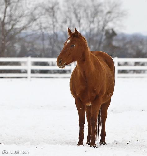 Horse-0033