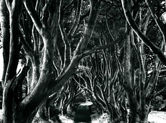 Spooky (spatialpan) Tags: trees blackandwhite tree photoshop weird spooky northernireland northern antrim causewaycoast 450d scenicsnotjustlandscapes antrlm