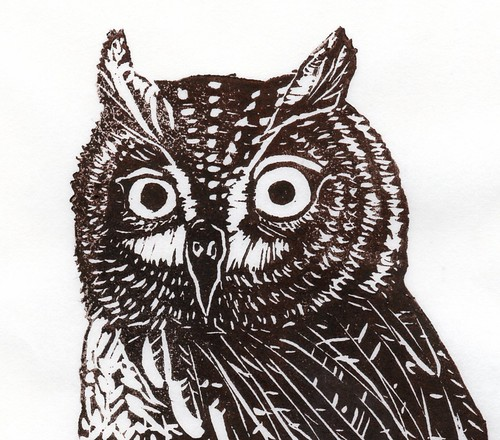 detail scan of screech-owl