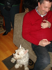 Matt's Birthday 2011 (S.S.Poseidon) Tags: dog pet westie annie mikeyv