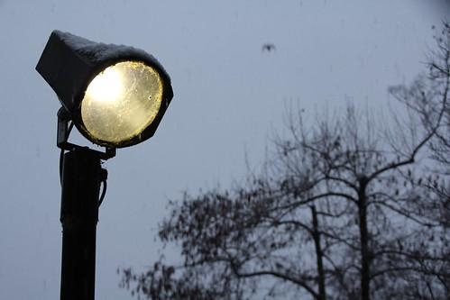 ライトと鳥さん