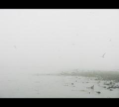 todas las maanas del mundo son caminos sin retorno - all the mornings in the world are ways of no return (MO3PA) Tags: sea portugal fog lisboa lisbon niebla