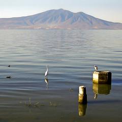 buenos dias Lago de Chapala (uteart) Tags: mountain lake reflection square morninglight earlymorning ducks squareformat whitecrane utehagen uteart mountainfolds mountgarcia goodmorninglakechapala buenosdiaslagodechapala