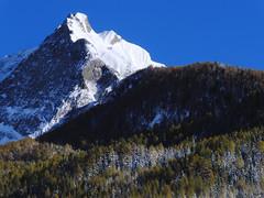Gipfel im Winter (mikiitaly) Tags: schnee winter berg wald bume gipfel pfitschtal pfitsch gigilivornosfriends