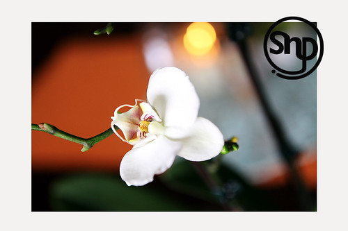 4 . orchid .