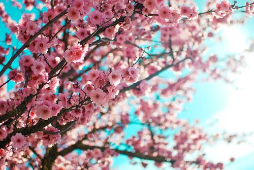 spring1-0153