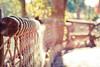 {Tom Sawyer} Fence Friday (Jaime973) Tags: canon fence 50mm orlando raw florida disneyworld friday tomsawyerisland hff rebeccalilypreset jessicadrossintexture fencefriday