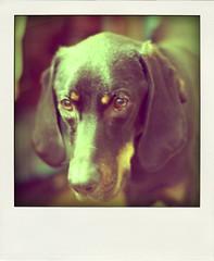 retro-hound3