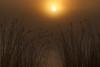 Sunrise and Grasses (Erik Pronske) Tags: california sun fog sunrise river country delta grasses sacramento slough stockton hdr carlzeiss cz135