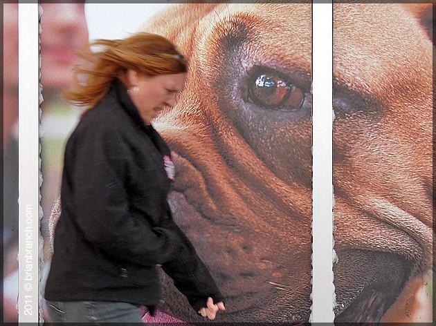 P1140403_pedestrian+dog