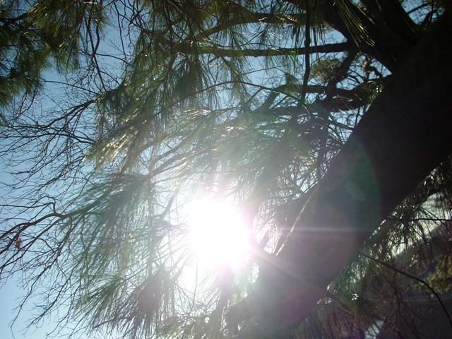 tree climbing 032