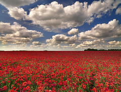 Wiltshire (peterspencer49) Tags: england sky clouds landscape poppy poppies wiltshire poppyfields fieldsofpoppies 5dmkll peterspencer