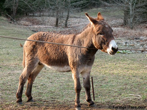 The Daily Donkey 36