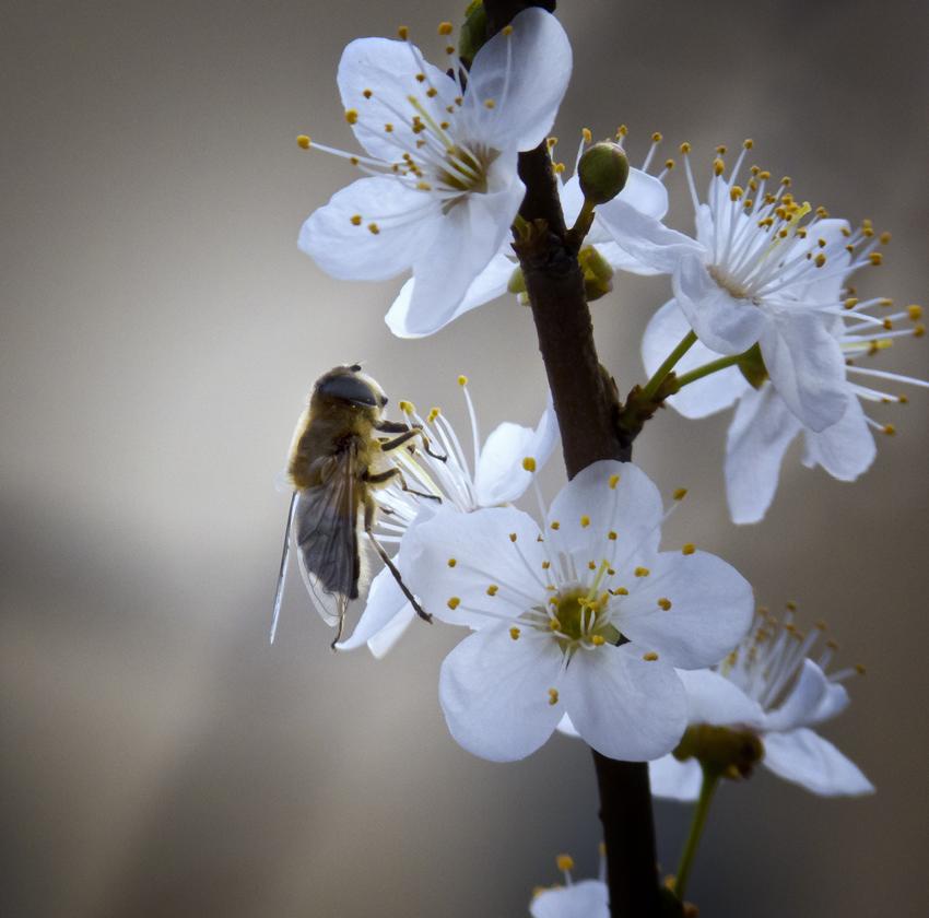 La primavera viene de perfil